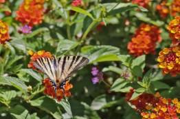 Botanical Park- Gardens Of Crete: Butterflies on Fruit Blossoms