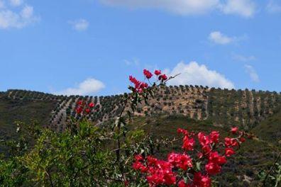 Botanical Park and Gardens Of Crete- Blossom of our gardens: Detail