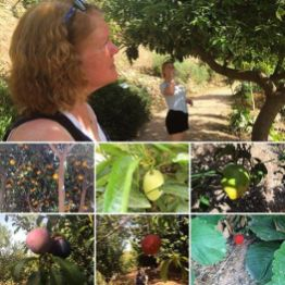 Botanical Park and Gardens Of Crete- Fruit collage
