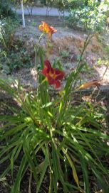 Botanical Park and Gardens Of Crete- Colourful Flower
