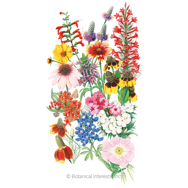 Southern Hills and Plains Flower Mix Seeds