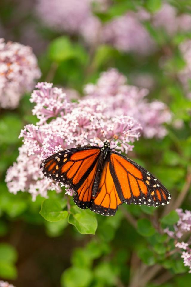 butterfly-house_gallery3.jpg