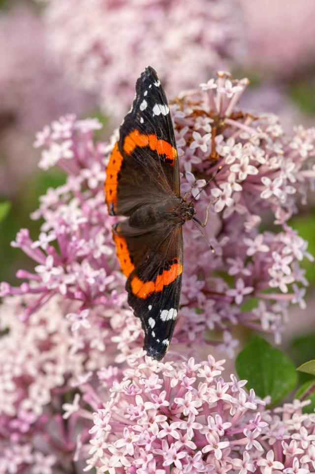 butterfly-house_gallery5.jpg