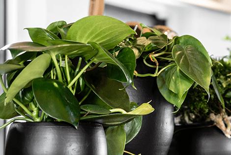 plantes interieures qualite d air et