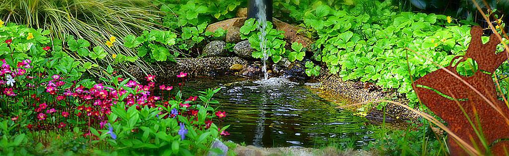 jardin aquatique entretien du bassin