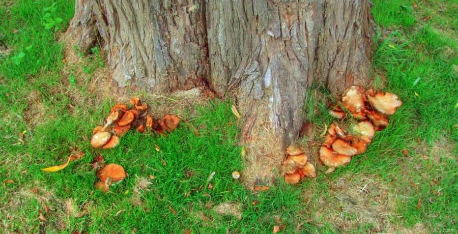 Tree and fungus