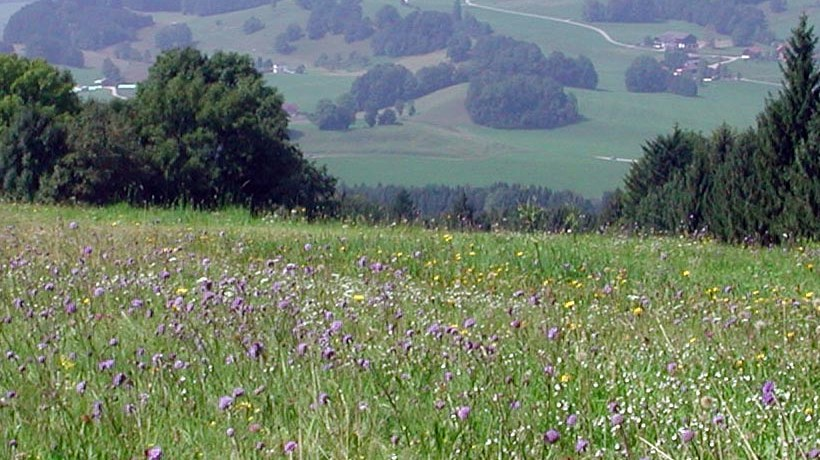 A meadow in Austria with high biodiversity; the importance of biodiversity is emphasized in the EU report