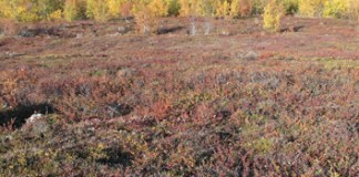 Vegetation structure and invasibility of arctic tundra