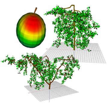 Modelling fruit temperature dynamics in apple