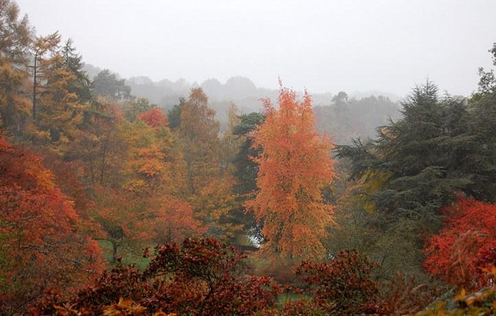 Winkworth, UK, autumn leaves
