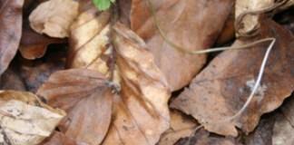 Tree litter effects on understorey vegetation