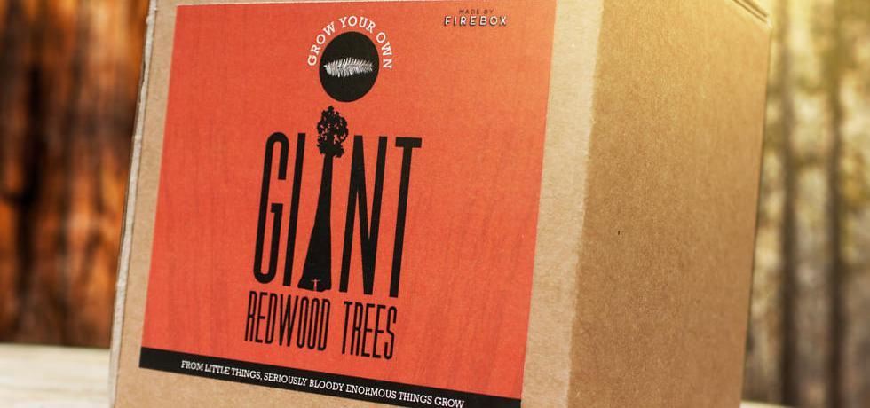 Redwood seeds for sale