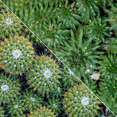 Environmental similarity and convergence between succulent plants