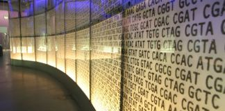 DNA on a wall