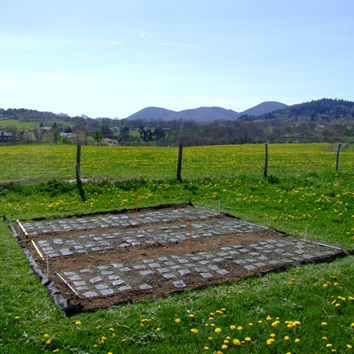 Predicting mixed-species litter decomposition