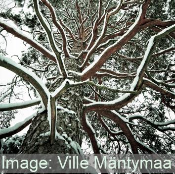 Freezing-related CO2 bursts reduce winter embolism
