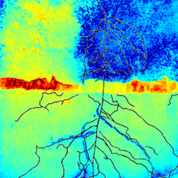 Multi-imaging approach to study the root–soil interface