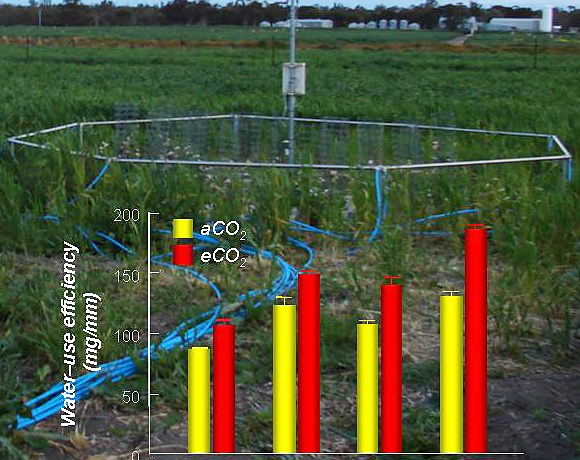 Effects of elevated CO2 and P on drought tolerance