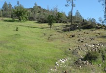 harsh and lush serpentine grasslands in California