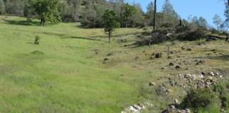 harsh and lush serpentine grasslands in California