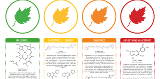 The Chemistry of Leaves.