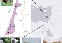 Flower of Iris atropurpurea in NET population and distribution map of I. atropurpurea.