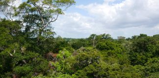 Caxiuanã National Forest Reserve in the lowland Amazon Rainforest.
