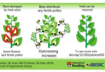 Faba bean response to heat stress