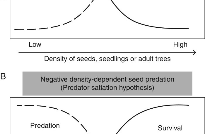 Hypotheses and predictions about the probability of seed survival or predation as a function of the density of seeds, seedlings or adult trees.