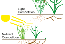 Light competition versus nutrient competition.