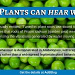 What! Plants can <em> hear </em> water???