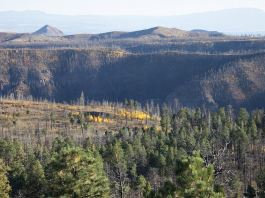 Tree mortality in northern New Mexico. October 2016.