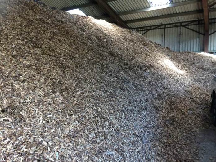 Willow wood chips