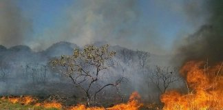 Savanna fire, an increasingly rare sight in parts of the Cerrado.