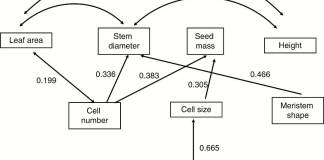 Path analysis of relationship between meristem summary variables, nuclear genome size and plant traits.