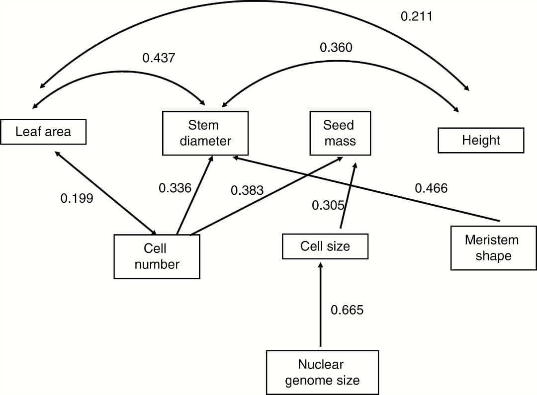 Shoot apical meristem and plant body organization a cross species path analysis of relationship between meristem summary variables nuclear genome size and plant traits 2 1016 df 8 p 0253 ccuart