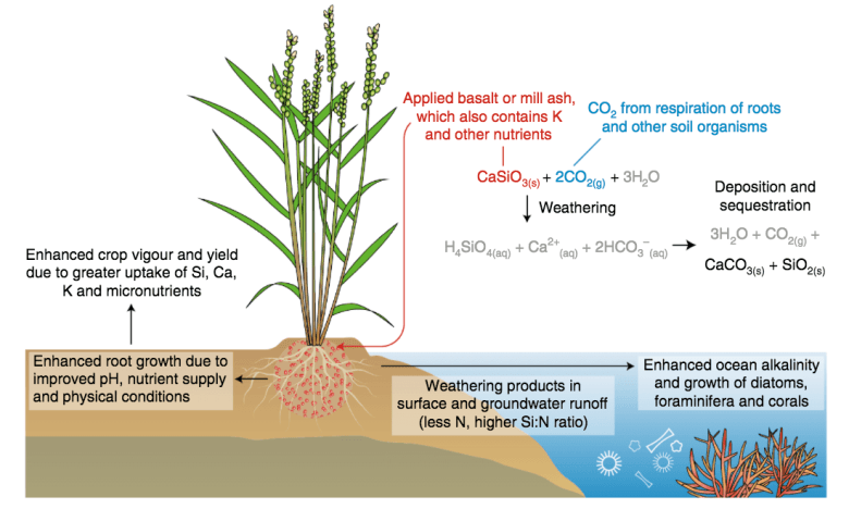 Summary of the potential effects of weathering of crushed basalt or silicate-rich wastes, such as sugarcane mill ash, applied to croplands.
