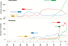 Species development over time