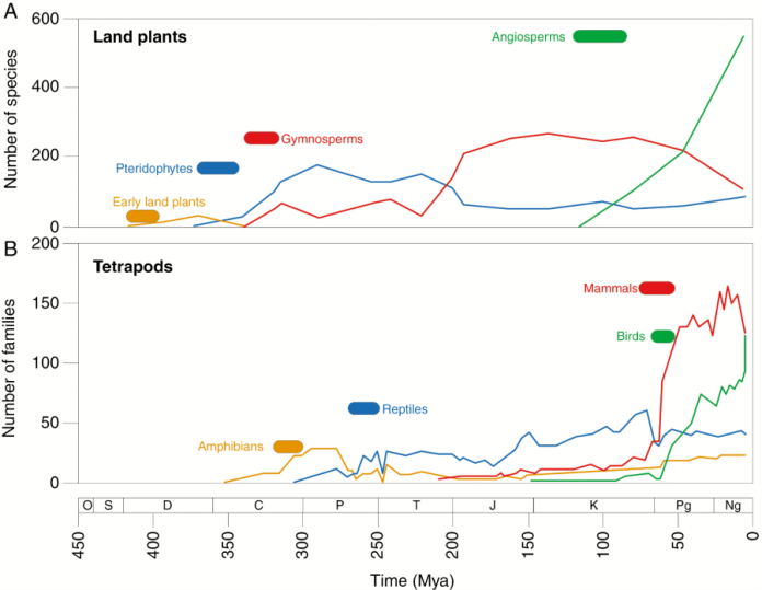 Species development over time