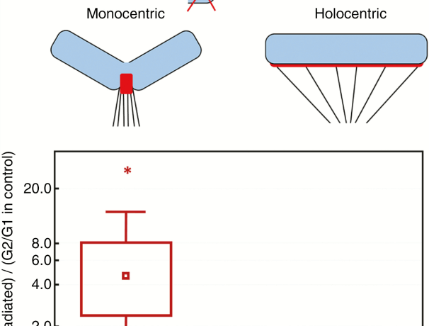Fragmentation of holocentric and monocentric chromosomes and gamma radiation response in monocentrics and holocentrics.
