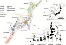 Distribution of the Solidago virgaurea complex in the Japanese Archipelago