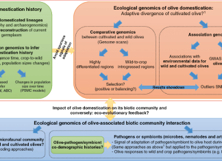 Methodological framework to address major questions on the impact of domestication on the evolution of olive and its associated biotic communities.