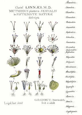 "The signboard ""Methodus Plantarum Sexualis in sistemate naturae descripta"" (Leiden 1736) images according to Linnés sexual systems 24 classes."
