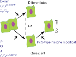 Major distinguishing regulators defining the decision of a dividing cell to quiesce, differentiate or enter dormancy.