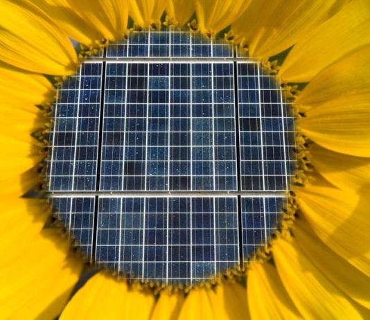 Silicon in a sunflower