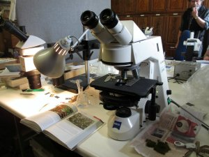 Identifying mosses in the lab