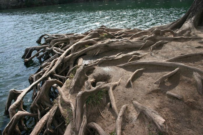 Roots holding on to soil