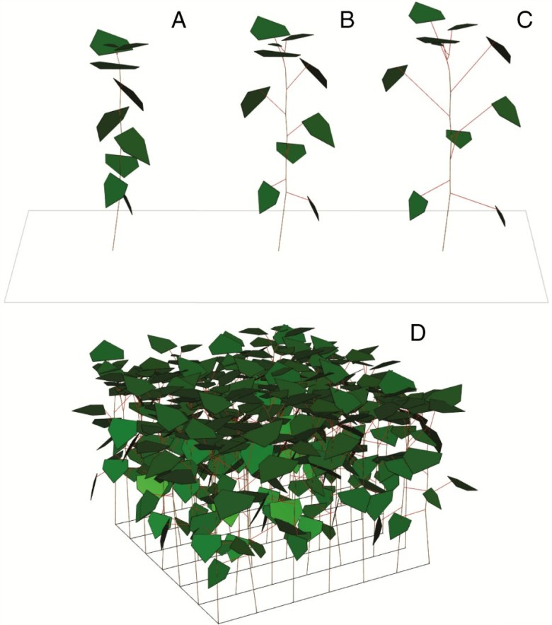 Examples of modelled plant architecture