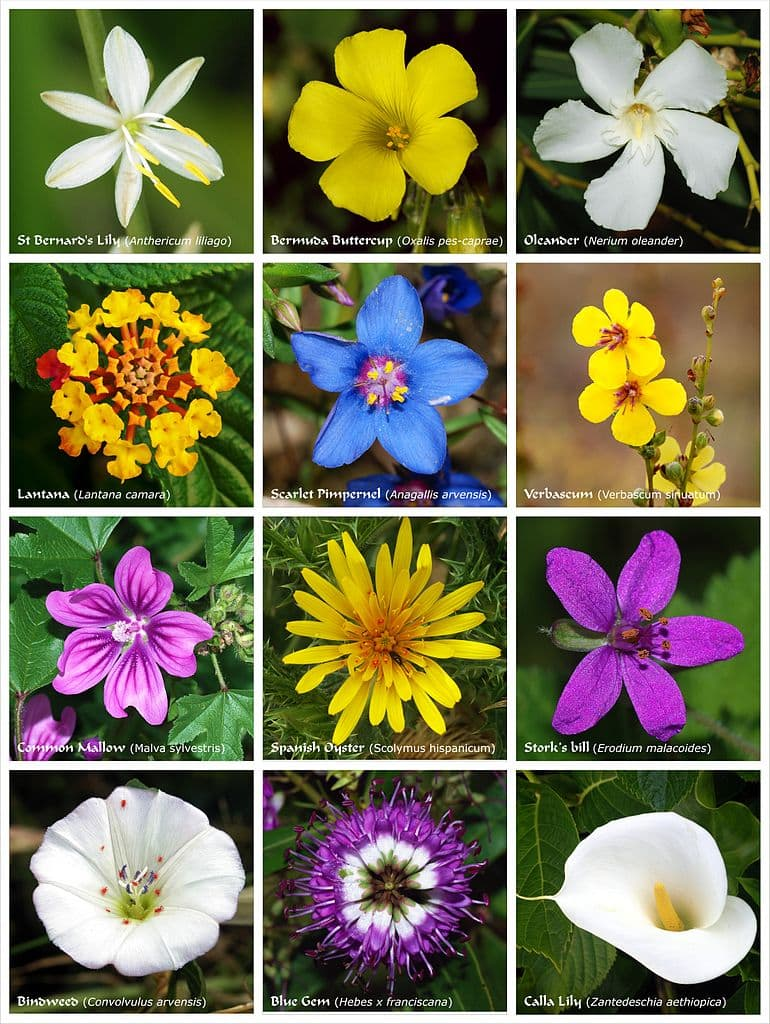 A poster with twelve flowers of different families.