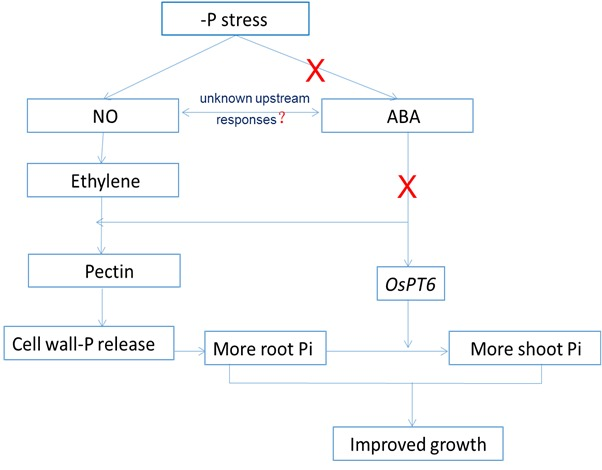 Model of P stress